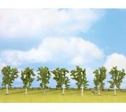 NOCH 25096 Birches, 7 pieces, approx. 10 cm high
