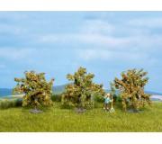 NOCH 25114 Orange Trees, 3 pieces, 4 cm high