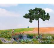 NOCH 21997 Pine
