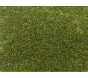 NOCH 07083 Wild Grass